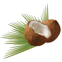 coconut-979858_960_720